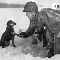 Soldiers and Dogs in WWII